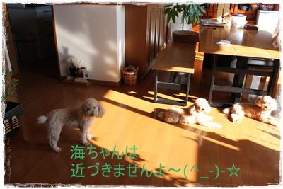 2011_1213_104137-IMG_5093.jpg