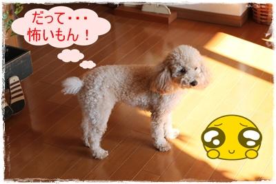 2011_1213_104141-IMG_5094.jpg