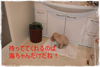 2011_1217_010946-IMG_5118.jpg