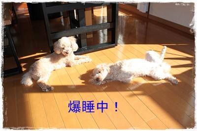 2012_0117_112543-IMG_5376.jpg