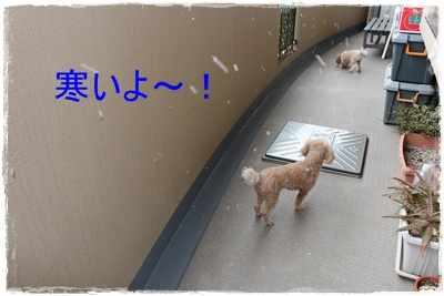 2012_0125_0949<br />42-IMG_5441.jpg