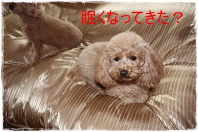 2012_0127_132209-IMG_5491.jpg