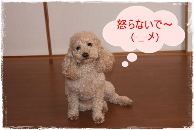 2012_0212_113840-IMG_5681.jpg
