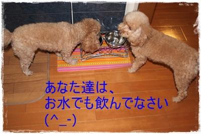 2012_0213_085350-IMG_5689.jpg