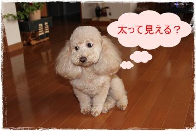 2012_0226_155139-IMG_5830.jpg
