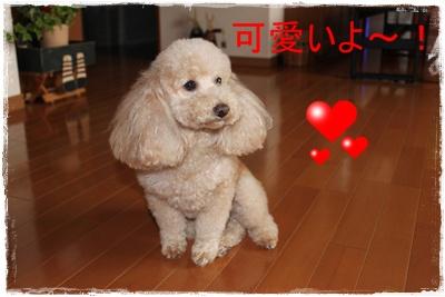2012_0226_155141-IMG_5831.jpg
