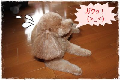 2012_0226_163538-IMG_5833.jpg