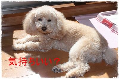 2012_0229_110627-IMG_5867.jpg