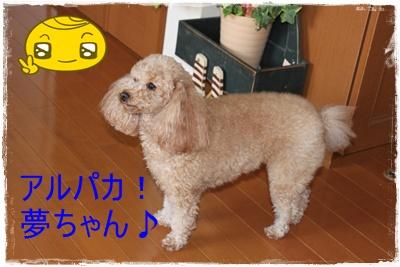 2012_0229_125342-IMG_5874.jpg