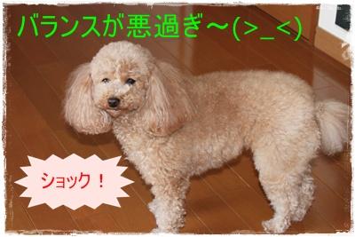 2012_0229_125623-IMG_5879.jpg
