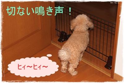 2012_0317_090443-IMG_6048.jpg