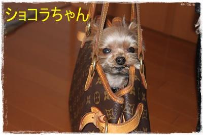 2012_0331_170400-IMG_6305.jpg