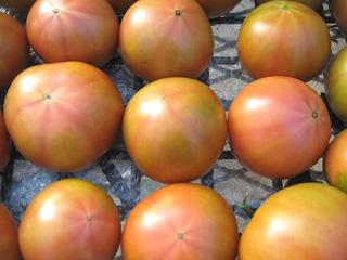 s-tomato014.jpg