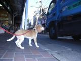 2009-10-27youchien11.jpg