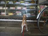 2009-10-27youchien7.jpg