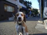 2009-11-6youchien3.jpg
