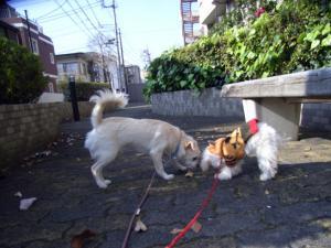 2009-12-10youchien20.jpg