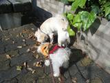 2009-12-10youchien21.jpg