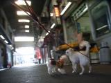 2009-12-10youchien24.jpg