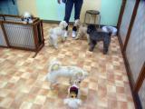 2009-12-10youchien29.jpg