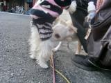 2009-12-17youchien11.jpg