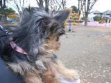 2009-12-9youchien10.jpg
