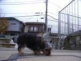 2009-12-9youchien6.jpg