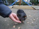 2009-12-9youchien8.jpg