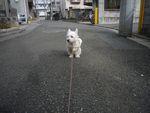 itakura110_20100201184326.jpg