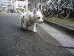itakura113_20100201184505.jpg