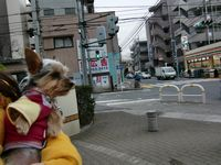 itakura120_20100202183008.jpg