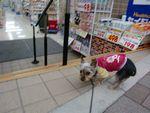 itakura123_20100202183008.jpg