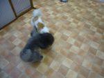 itakura621_20091103215222.jpg