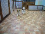 itakura810_20091231112625.jpg