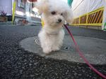 itakura842_20100105225356.jpg