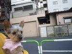 itakura957_20100124095447.jpg