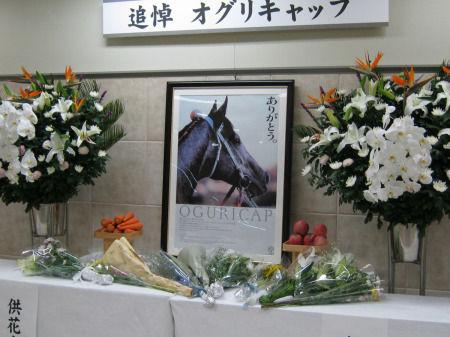 20100711-00000051-spn-horse-view-000.jpg