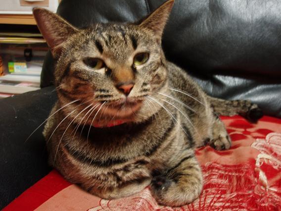 猫20091007 015-1