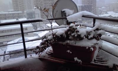 雪サンコミ4、110117_0924~01