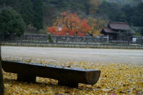 イチョウの下のベンチにすわって落ち葉が景色を眺めてました