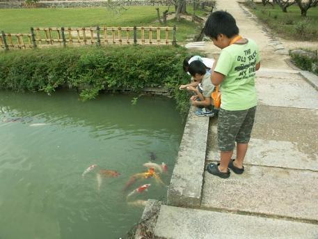 鯉さん餌たべたぁ?♪