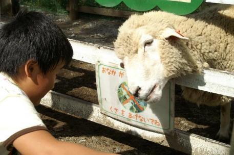 羊さんと♪