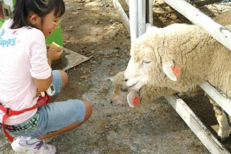 羊さんと♪♪