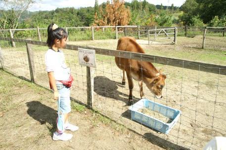 牛と姉ちゃん