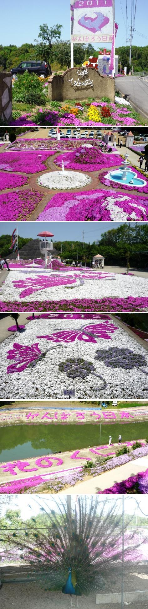 a芝桜 ジャルダン