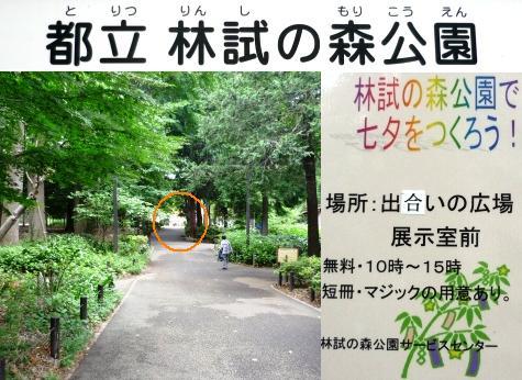 a七夕飾りP1180139