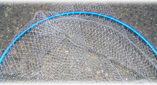 網は、6mm目なので、イワシも掬えます ♪