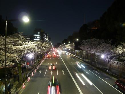 urban night / cherry blossoms