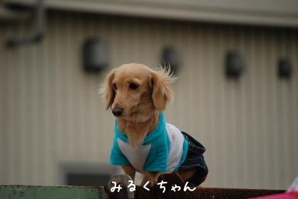 2010.5.22ケンちゃんの旅立ち@ワンワールド0040