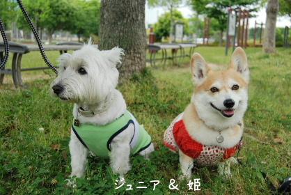 2010.6.7 半蔵クンと初対面♪0021